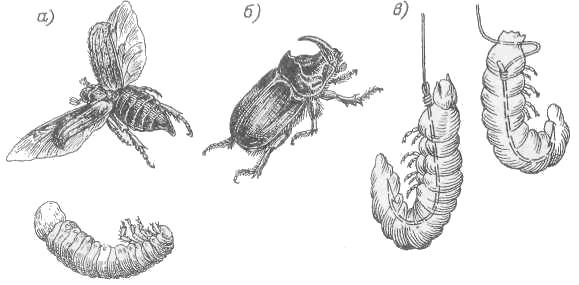 жуки наживка