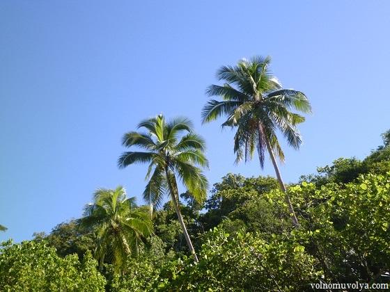 Priklyucheniya-na-ostrove-Nai