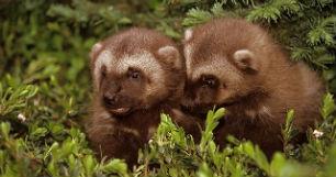 Животный мир леса: фото, описание животных