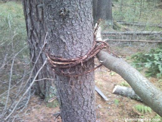 привязываем поперечину с помощью корней