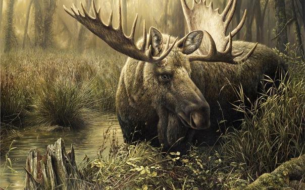 картина лось в лесу