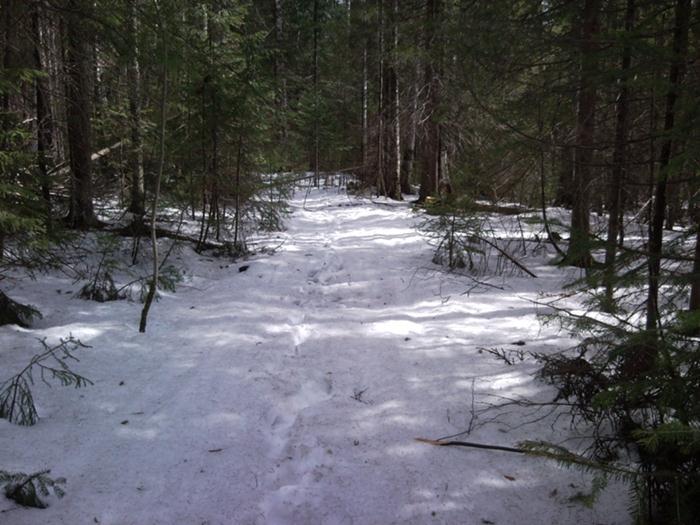 поход в лес весной