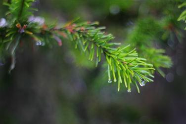 таёжные-леса-фото