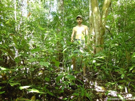 in-the-jungle