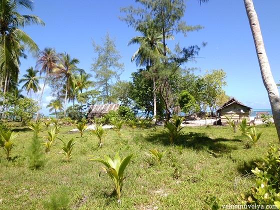 palms-grove