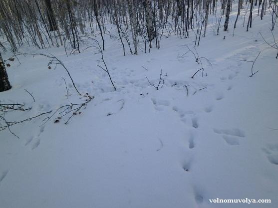 заячьи следы на снегу зимой
