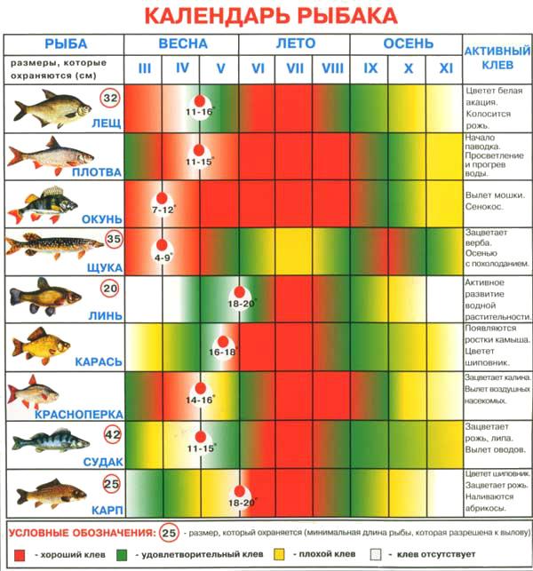 какой клев рыбы на сегодня в ростове