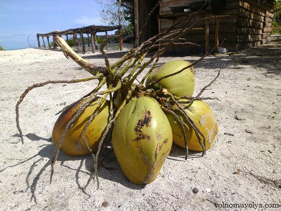 незрелые кокосы