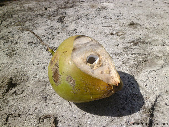 molodoi-kokos