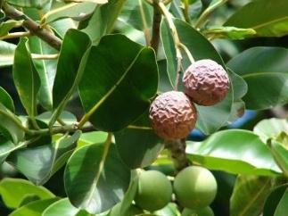 tropicheskie-lesa