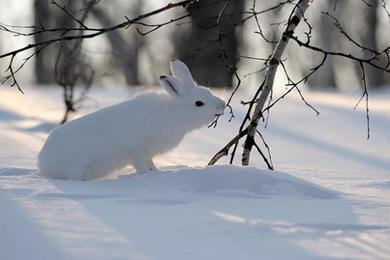 петли-на-зайца