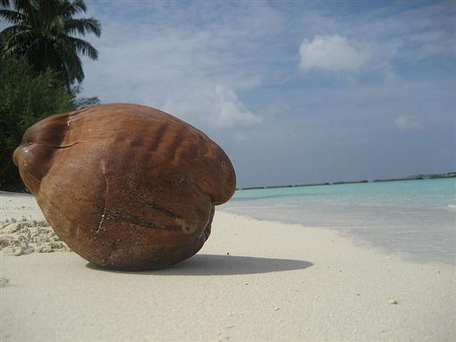 зрелый кокос