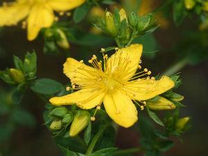 салат метелка для очищения кишечника